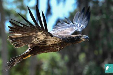 community-service-parks-eagle